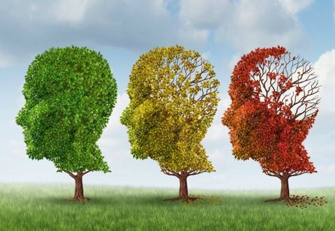 Can You Prevent Alzheimer's Disease?