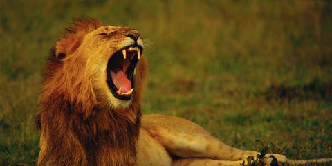 yawning.jpg