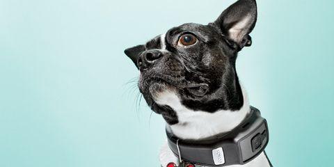 dog-fitness.jpg