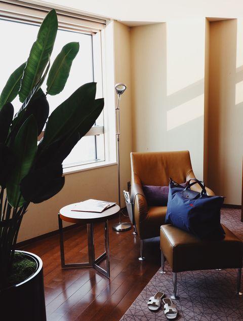 Cactus, Room, Green, Property, Houseplant, Interior design, Furniture, Living room, Floor, House,