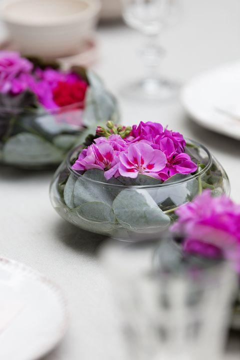 Geraniums/Pelargonium - summer decoration ideas