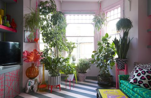 Houseplant, Room, Green, Interior design, Red, Property, Living room, Pink, Home, House,