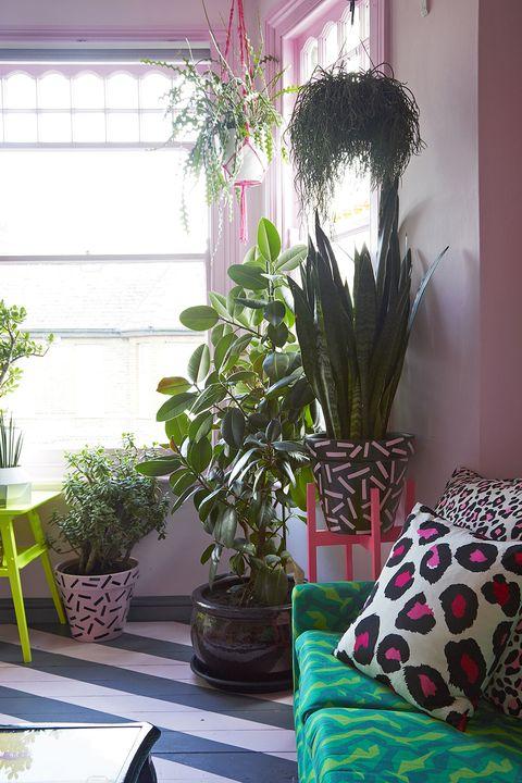 Houseplant, Living room, Room, Pink, Interior design, Green, Home, Furniture, Flower, Flowerpot,