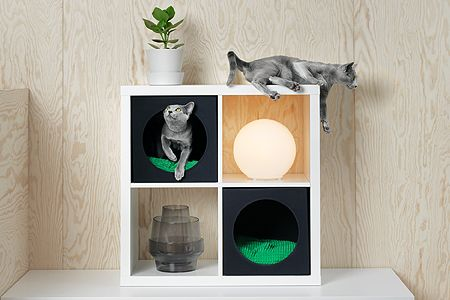 Shelf, Cat furniture, Cat, Russian blue, Shelving, Small to medium-sized cats, Felidae, Domestic short-haired cat, Furniture, Cat supply,