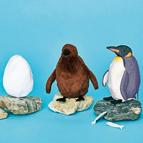 Bird, Vertebrate, Penguin, Flightless bird, Gentoo penguin, King penguin, adélie penguin, Beak, Emperor penguin, Animal figure,