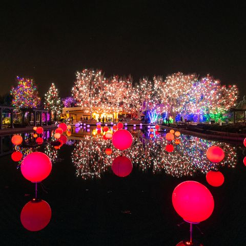 red globes of light on water in front of trees lit with christmas lights