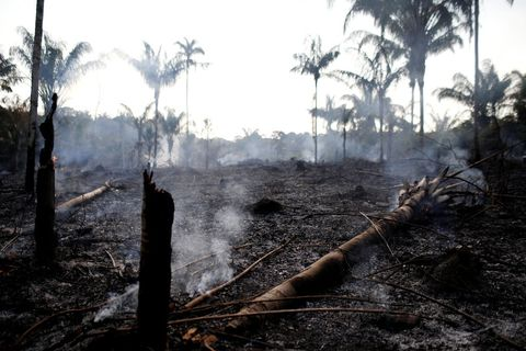 Tree, Woody plant, Arecales, Palm tree, Pollution,