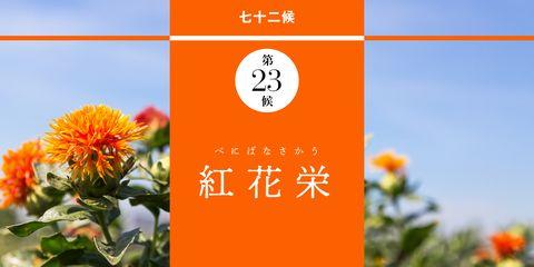 【皐月の歳時記】 小満  紅花栄 べにばなさかう