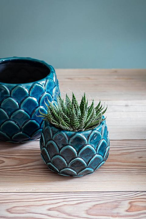 Blue, Flowerpot, Green, Turquoise, Aqua, Ceramic, Bowl, Houseplant, Grass, Still life photography,