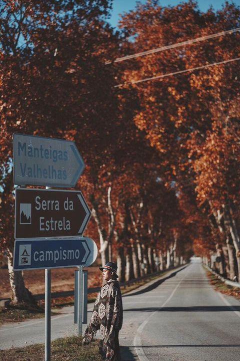 Tree, Leaf, Sky, Autumn, Road, Woody plant, Sign, Signage, Traffic sign, Lane,