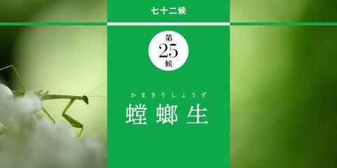 【水無月の歳時記】 芒種| 螳螂生 かまきりしょうず