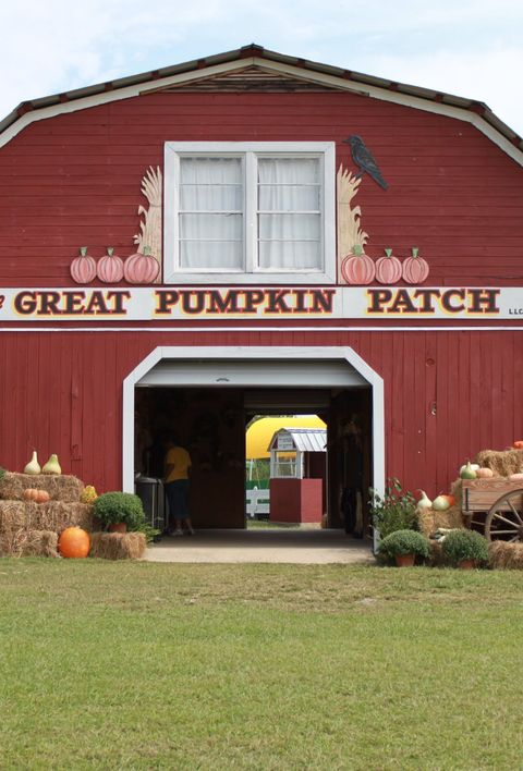pumpkin patch near me the great pumpkin patch