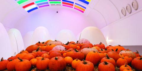 pumpkin patch london uk
