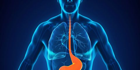 acid reflux digestive system