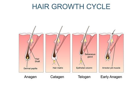 causes of thinning hair, hair loss