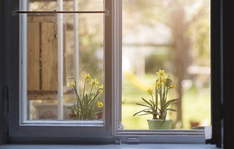 You Leave Doors and Windows Open, seasonal allergies