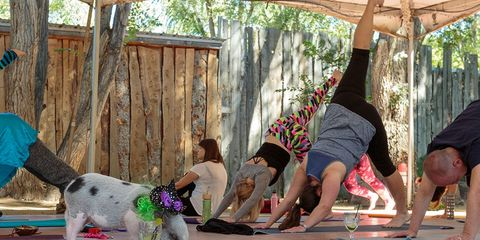 Yoga with a pig and margaritas