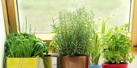 variety of indoor herbs