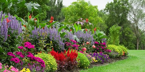 organic flower garden