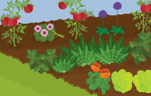 A Beginner's Guide To Organic Pest-Free Gardening