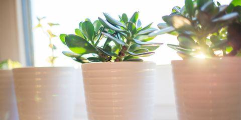 planted pots