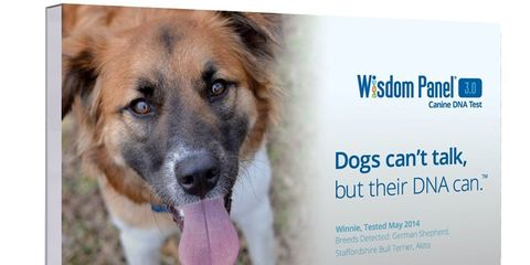 Dog DNA test on sale on amazon