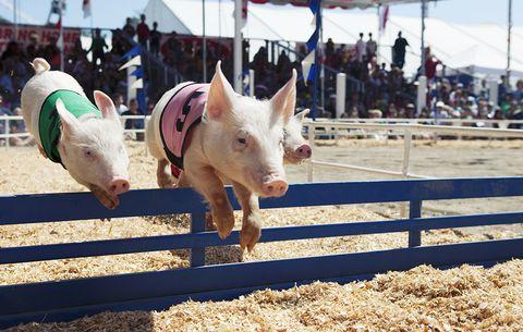 county fair, summer weight gain