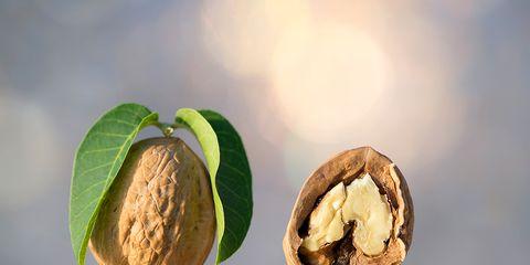 Walnut, Nut, Food, Tree, Plant, Nuts & seeds, Produce, Fruit, Macadamia, Pistachio,