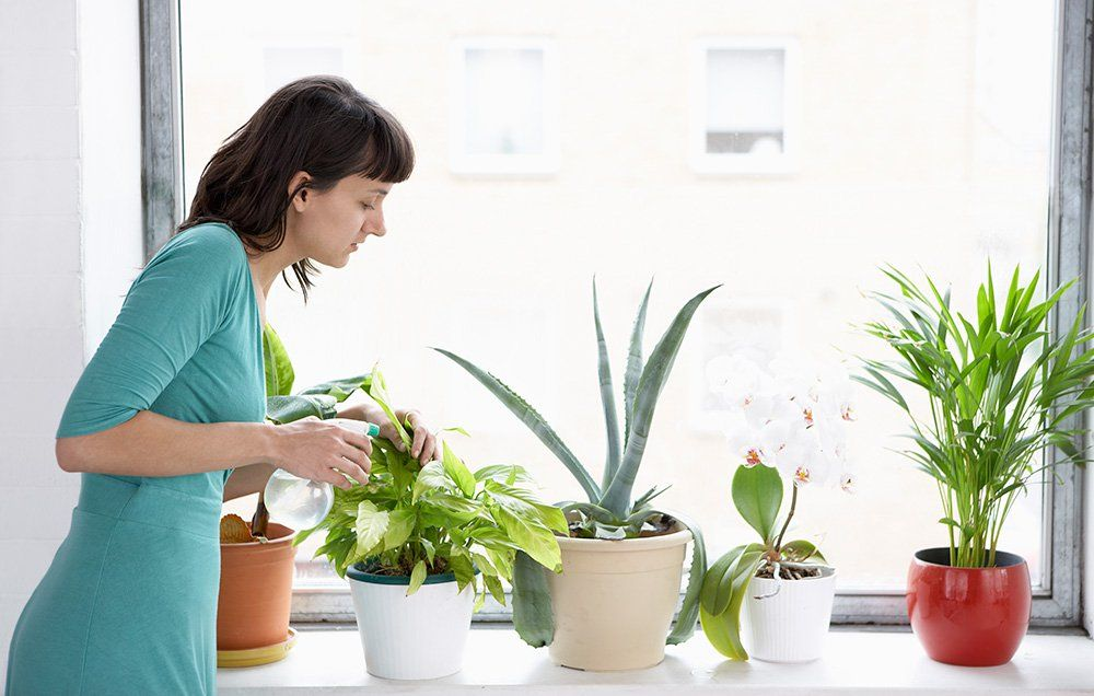 10 Low-Maintenance Houseplants You Only Have To Water Once A Month |  Prevention