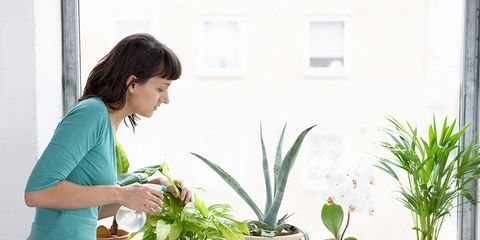 Houseplant, Flowerpot, Plant, Flower, Botany, Grass family, Grass, Room, Interior design, Moth Orchid,