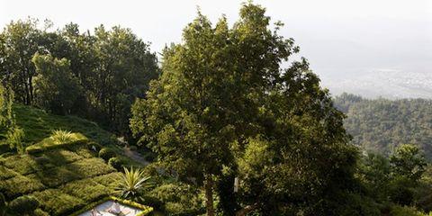 Vegetation, Plant community, Garden, Shrub, Evergreen, Plantation, Hedge, Botanical garden, Park, Temperate broadleaf and mixed forest,