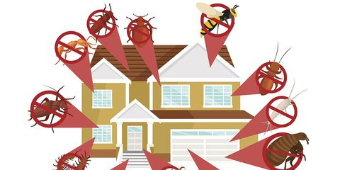 how to get rid of household pests
