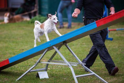 pet agility balance board
