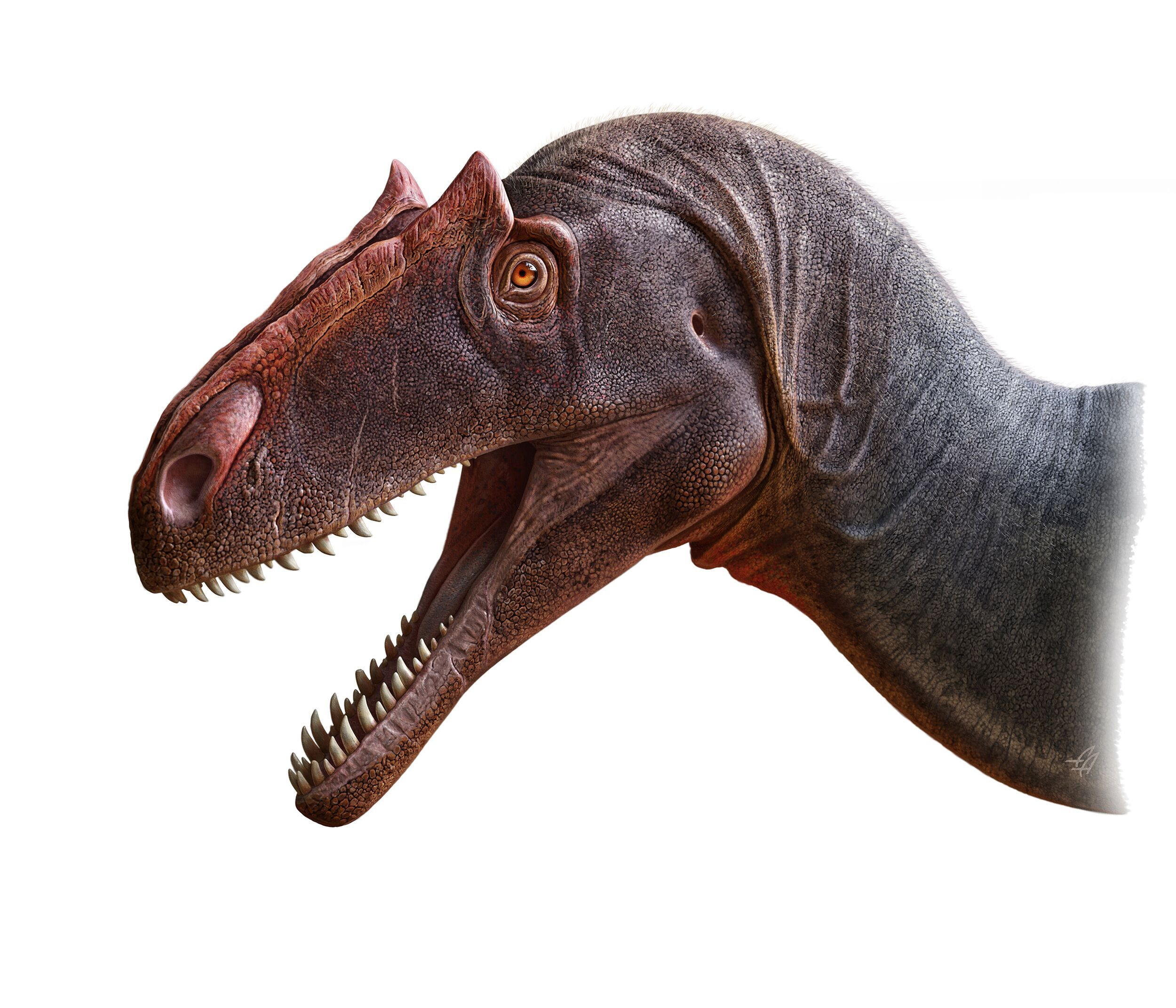 New Dinosaur Alert! Just Look at This Marvelous Meat-Eating Allosaurus
