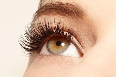 Eyelash, Eyebrow, Eye, Skin, Close-up, Cosmetics, Organ, Eyelash extensions, Iris, Beauty,