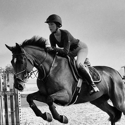 Horse, Bridle, Mammal, Vertebrate, Rein, Halter, Equestrianism, Horse supplies, Saddle, Equestrian,