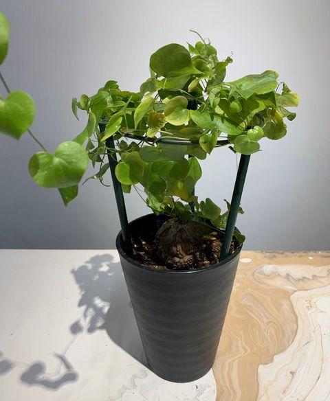 Flowerpot, Flower, Houseplant, Plant, Leaf, Herb, Flowering plant, Annual plant, Plant stem,