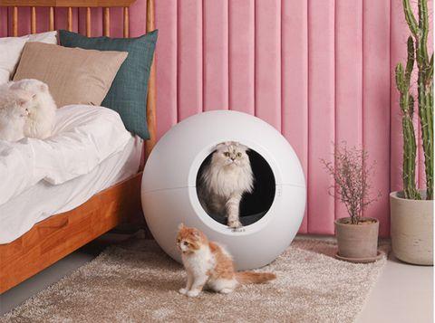 一台白色的自動貓砂盆裡有貓咪