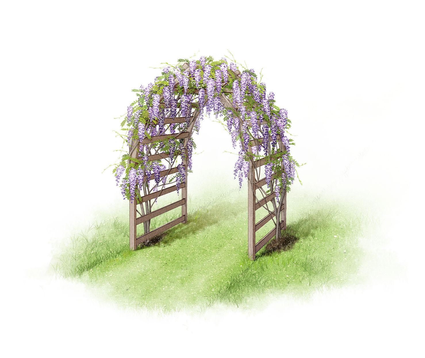 Garden arch illustrations