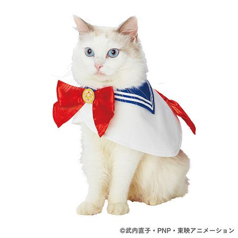 Cat, Felidae, Small to medium-sized cats, Ragdoll, Carnivore, Whiskers, Turkish angora, Tie, Japanese bobtail, Costume,
