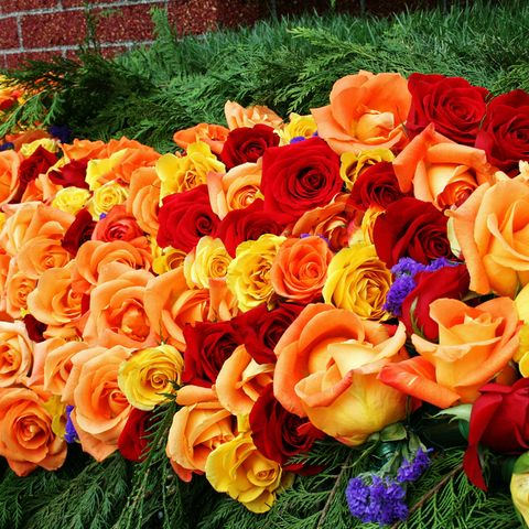 Flower, Orange, Rose, Petal, Garden roses, Plant, Yellow, Rose family, Cut flowers, Flowering plant,