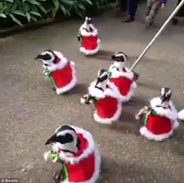 Penguins Dressed as Santa Spark Outrage on the Internet