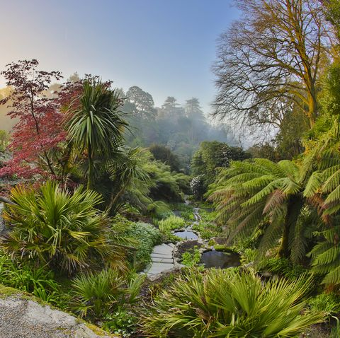 Trebah Gardens: Cornwall holidays for nature lovers