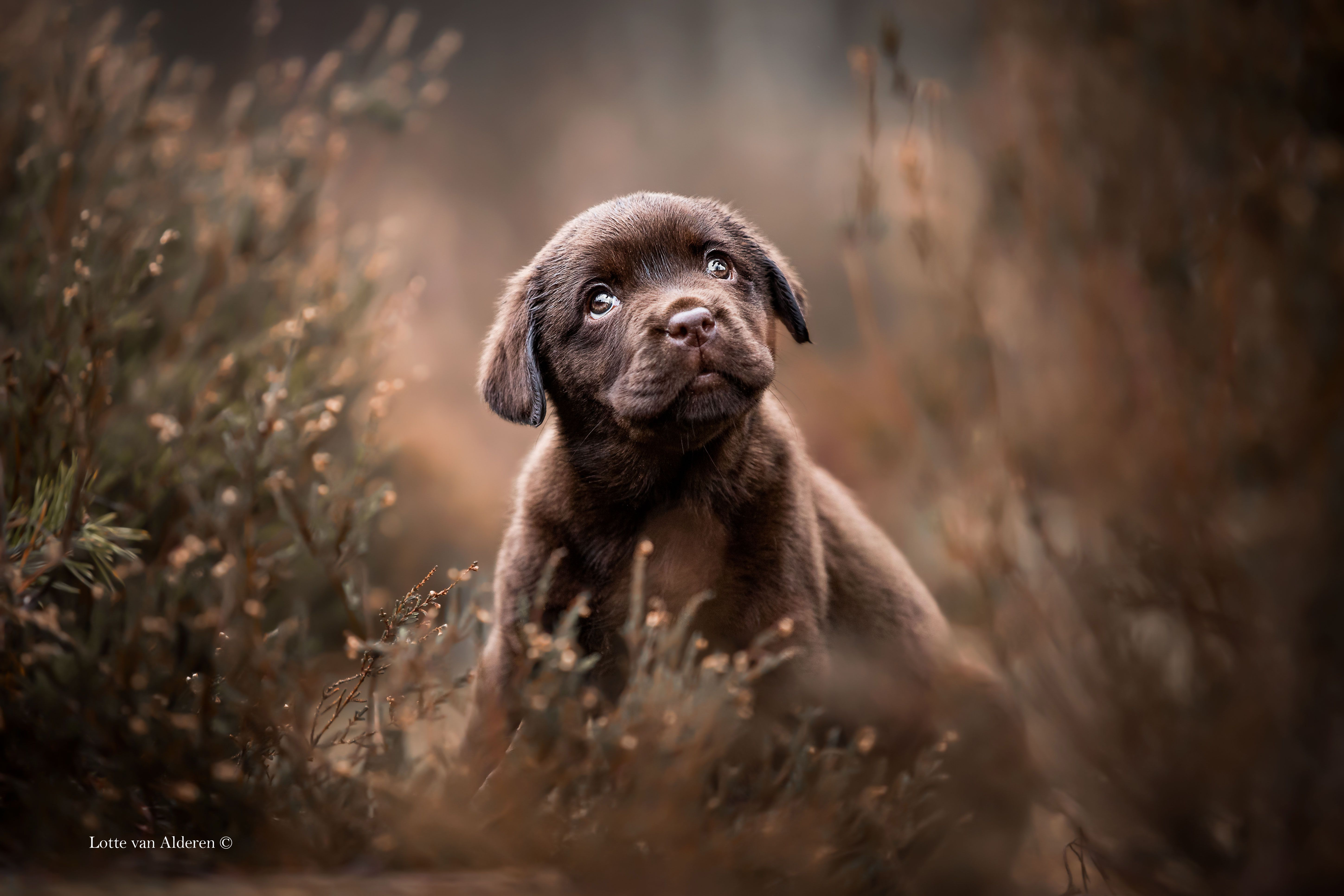 30 award-winning dog images from The Kennel Club's photography competition