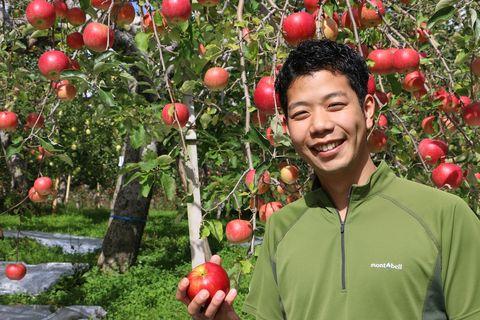 青森縣蜜富士蘋果