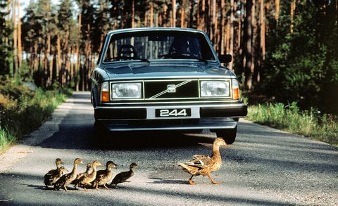 Vehicle, Car, Wildlife, Volvo 700 series, Volvo cars, Classic car, Family car, Sedan, Road, Volvo 300 series,