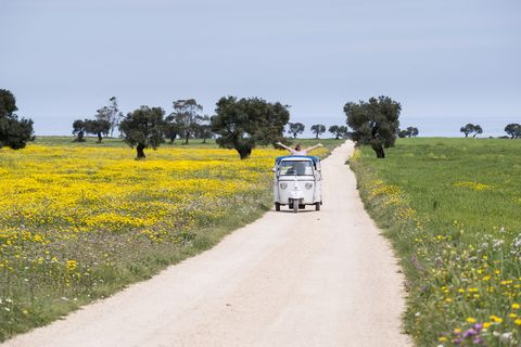 Rapeseed, Canola, Yellow, Field, Road, Mustard plant, Transport, Grassland, Plant, Wildflower,