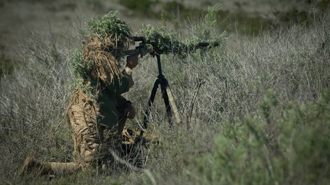 Soldier, Military camouflage, Wildlife, Grass, Military organization, Grass family, Airsoft, Camouflage, Ghillie suit, Tree,
