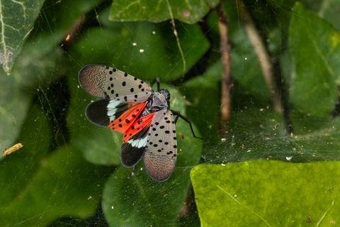 Invertebrate, Vegetation, Organism, Arthropod, Insect, Butterfly, Leaf, Pollinator, Adaptation, Pest,