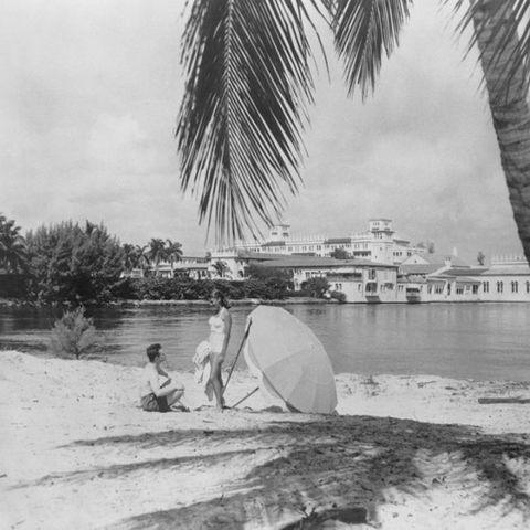 Tree, Palm tree, Arecales, Vacation, Vehicle, Beach, Tourism,